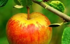 Apple1-425x425 (1)