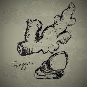 GINGER1-300x300