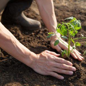 Can Biodynamic Farming Yield a Healthier Flour for Those Sensitive to Gluten?